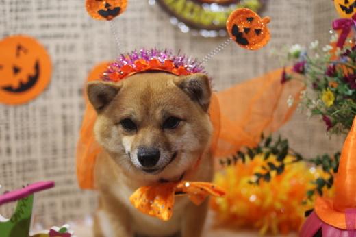 10月31日ご来店のワンちゃんです!!_b0130018_09335591.jpg