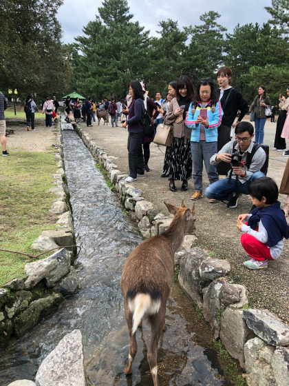 シェフェスタ奈良2019_c0113733_00055386.jpg