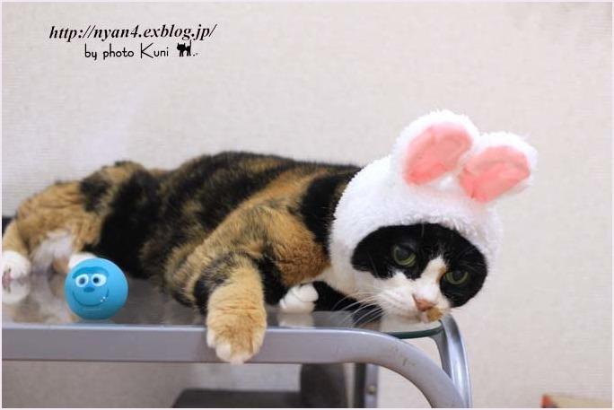 ピンクの猫ウサギ_f0166234_22234047.jpg