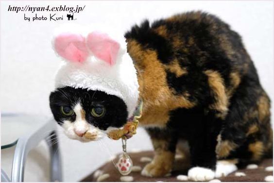 ピンクの猫ウサギ_f0166234_22240683.jpg