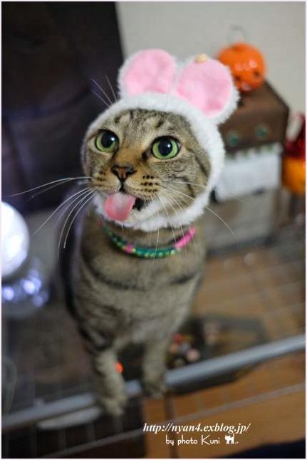 ピンクの猫ウサギ_f0166234_22320046.jpg