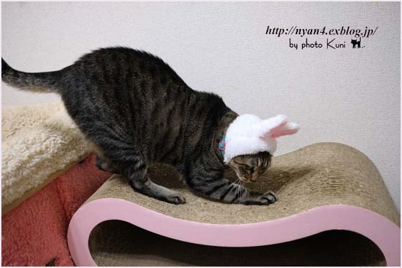 ピンクの猫ウサギ_f0166234_22521517.jpg