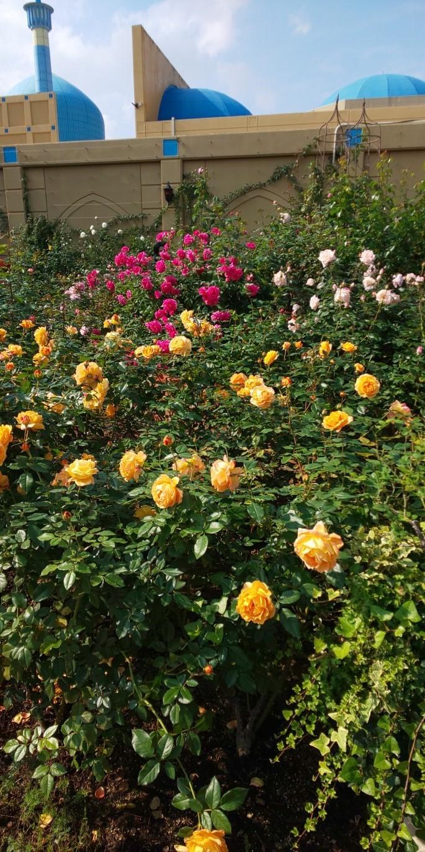 秋のバラまつり♪_a0167735_14231156.jpg