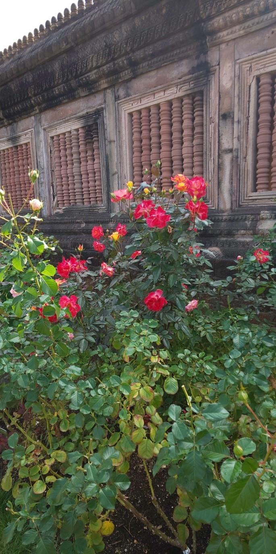 秋のバラまつり♪_a0167735_14234846.jpg