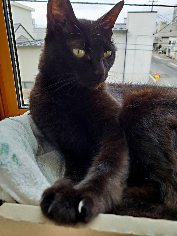 黒猫さ~ん 出番ですよ~!  2019/10/31-thu_f0031535_23370849.jpg