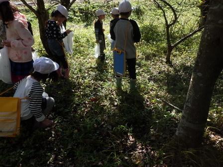 晴れました! 小学校の自然観察日和_a0123836_13240678.jpg