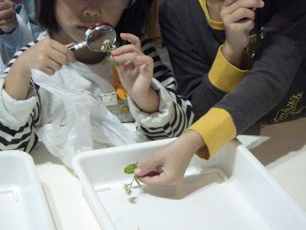 晴れました! 小学校の自然観察日和_a0123836_13240775.jpg