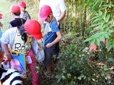 晴れました! 小学校の自然観察日和_a0123836_14295979.jpg