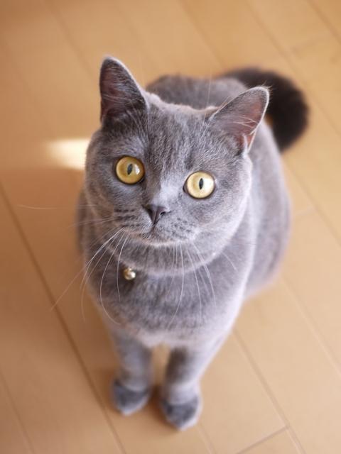 猫のお留守番 ちゃちゃちゃん編。_a0143140_18350342.jpg