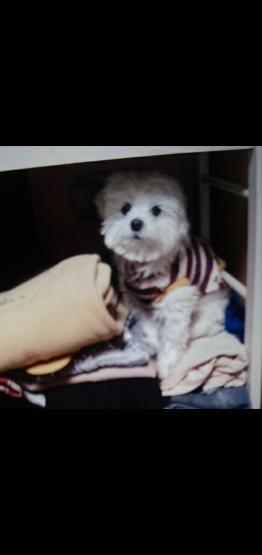 愛犬が_e0179943_00010200.png