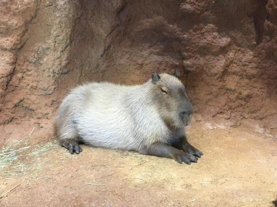 10月24日(火)八木山動物園2_b0206845_12183406.jpeg