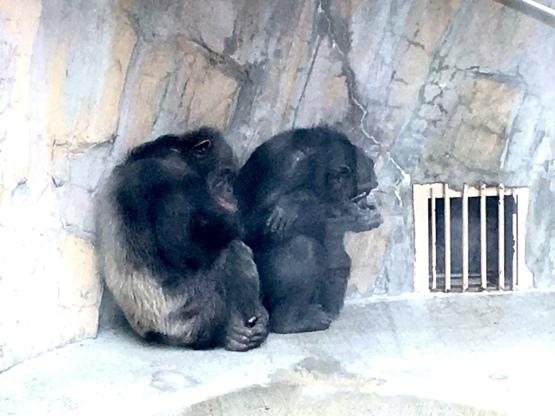 10月24日(火)八木山動物園2_b0206845_12185001.jpeg