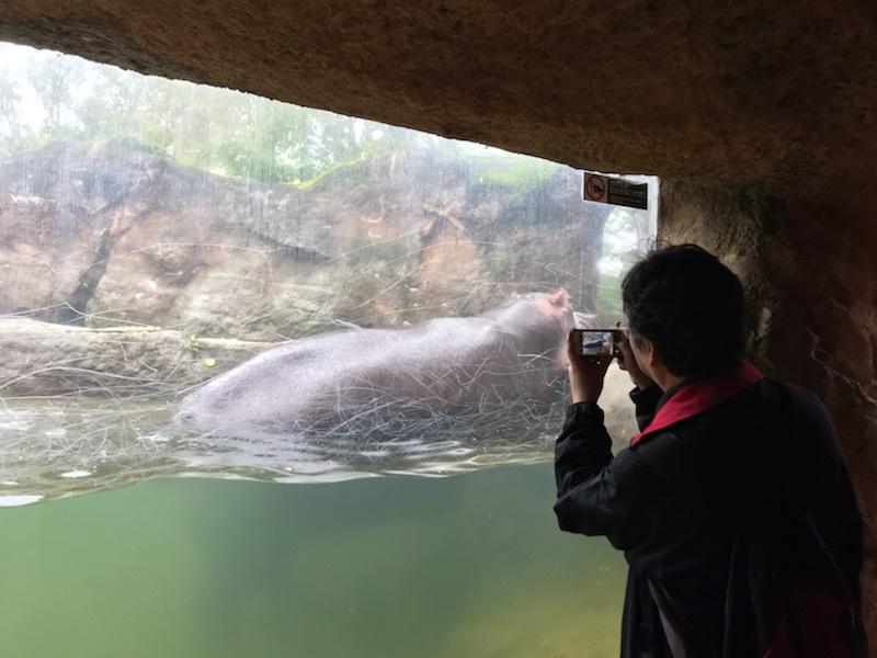 10月24日(火)八木山動物園2_b0206845_12193552.jpeg