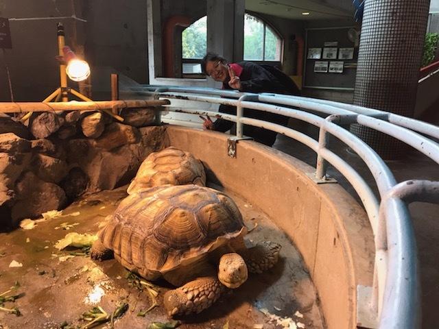 10月24日(火)八木山動物園2_b0206845_12194576.jpeg