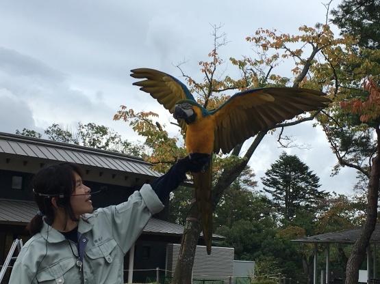 10月24日(火)八木山動物園3_b0206845_13405375.jpeg