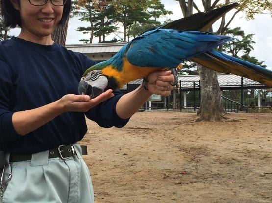 10月24日(火)八木山動物園3_b0206845_13412659.jpeg