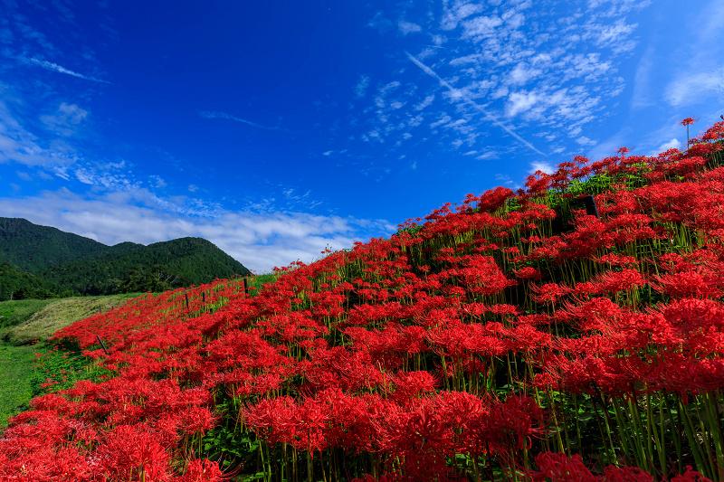 大原の彼岸花光景_f0155048_15144586.jpg