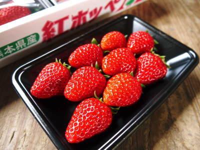 熊本産高級イチゴ『完熟紅ほっぺ』 令和元年も12月上旬からの出荷予定!定植後の様子を現地取材!_a0254656_17221876.jpg