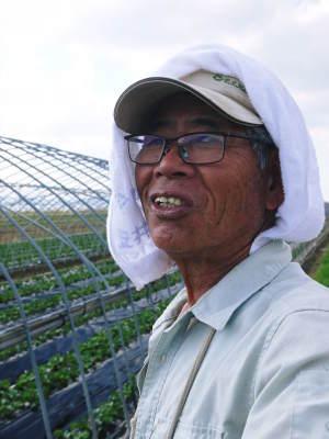 熊本産高級イチゴ『完熟紅ほっぺ』 令和元年も12月上旬からの出荷予定!定植後の様子を現地取材!_a0254656_17445765.jpg