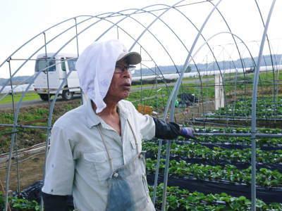 熊本産高級イチゴ『完熟紅ほっぺ』 令和元年も12月上旬からの出荷予定!定植後の様子を現地取材!_a0254656_17532926.jpg
