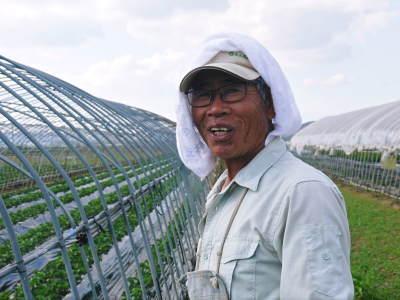 熊本産高級イチゴ『完熟紅ほっぺ』 令和元年も12月上旬からの出荷予定!定植後の様子を現地取材!_a0254656_18110403.jpg