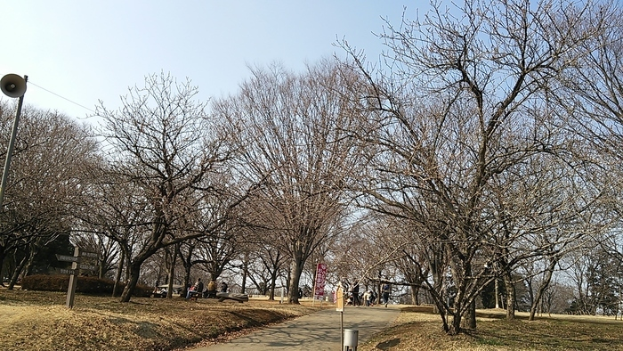 梅から桃へとまた春が近づき~_e0009056_14523934.jpg