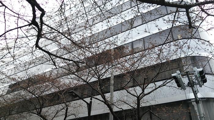 梅から始まり桜で終わり!?春到来!!_e0009056_14551475.jpg