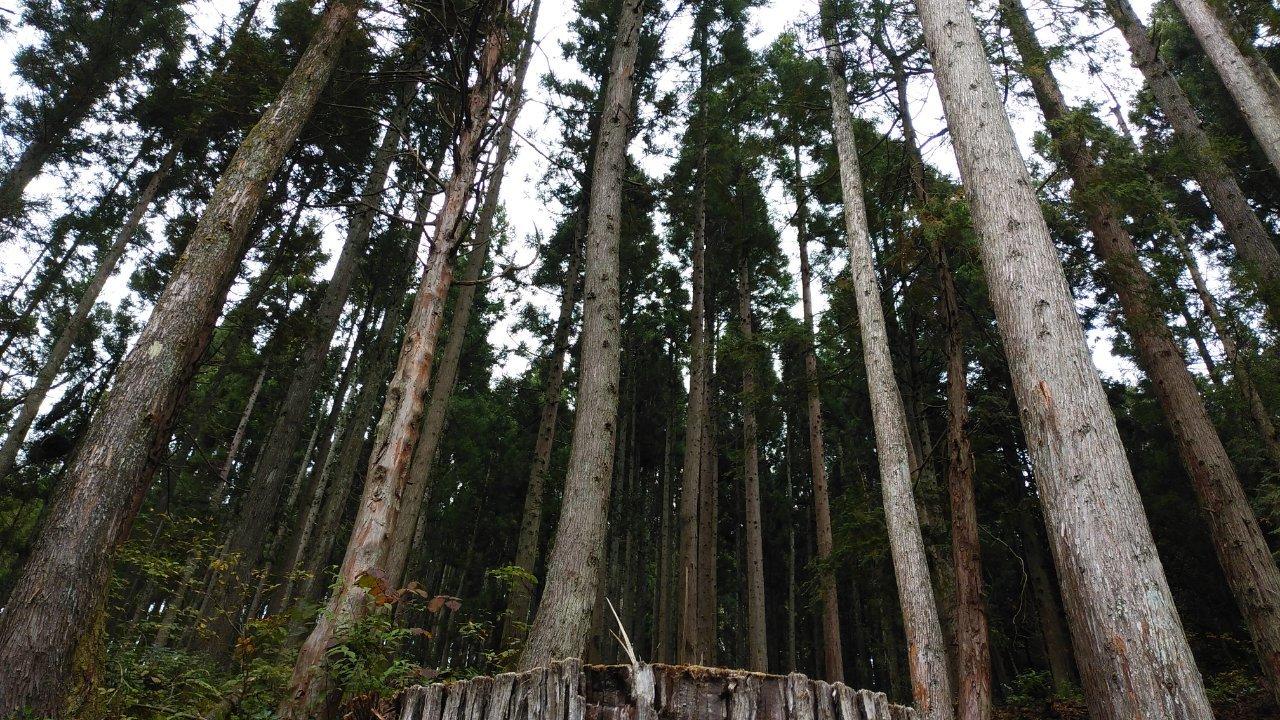県産杉の森ロケーションツアーへ_e0383176_15084851.jpg