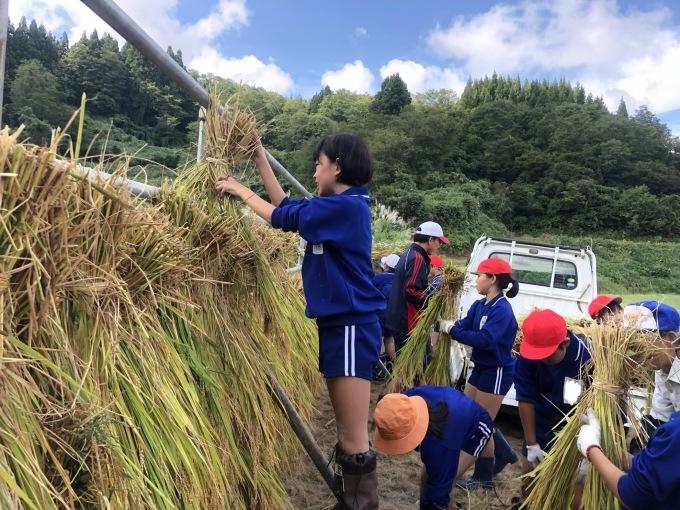 牧小5年生の稲刈り体験_d0182179_16371468.jpeg