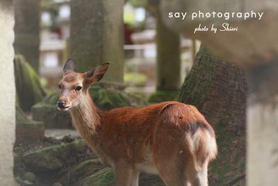 その鹿はちいさくて、毛並みが綺麗で_d0220593_19511730.jpg