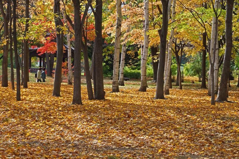 中島公園_d0162994_08404422.jpg