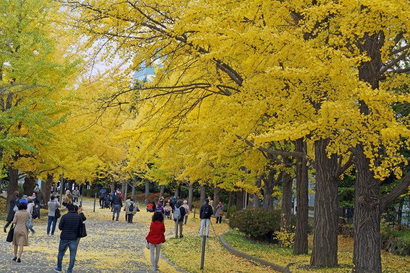 中島公園_d0162994_08453139.jpg