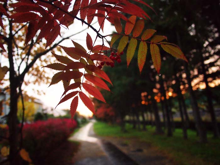 10月30日 今日の写真_b0103798_20202499.jpg