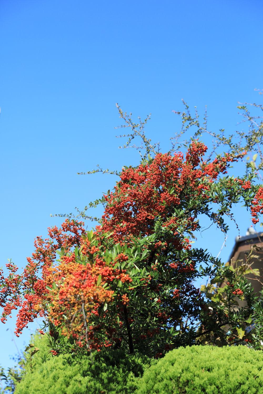 秋の朝♪_b0275998_09495191.jpg