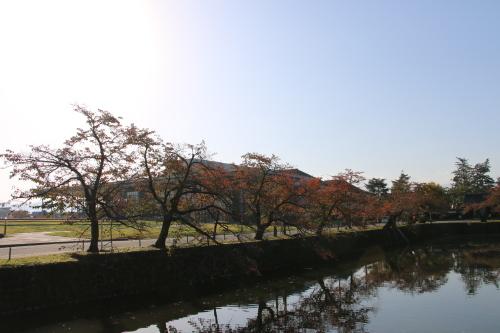 松が岬公園の朝、2019.10.31_c0075701_09364120.jpg