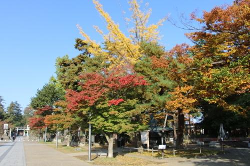 松が岬公園の朝、2019.10.31_c0075701_09385749.jpg
