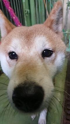 【犬・移動先募集】センター(支所)収容(10/28訪問)_f0242002_20240206.jpg