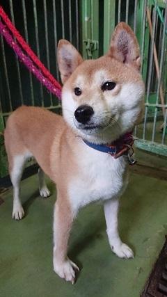 【犬・移動先募集】センター(支所)収容(10/28訪問)_f0242002_20241188.jpg