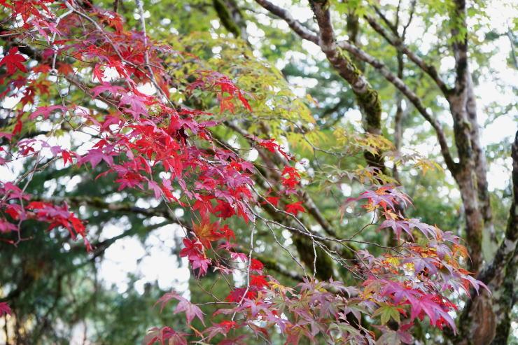 高野山へ_a0136507_21405970.jpg