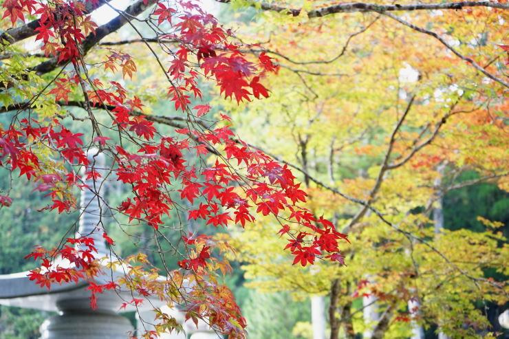 高野山へ_a0136507_21411210.jpg