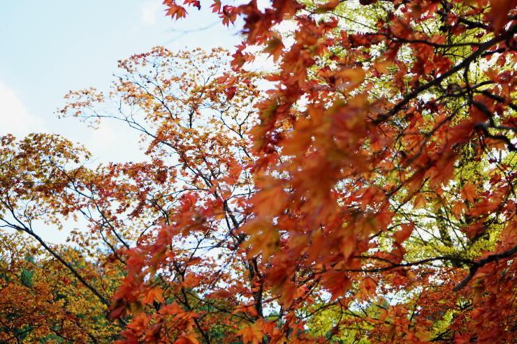 高野山へ_a0136507_21413218.jpg