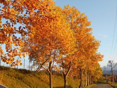10月31日(木)  晴れ  15度_f0210811_15534546.jpg