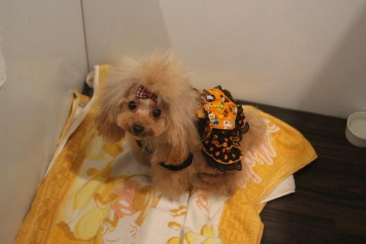 10月27日ご来店のワンちゃんです!!_b0130018_10270057.jpg