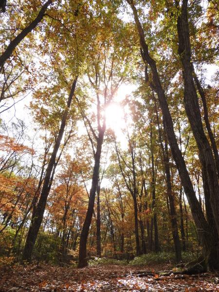 今週末の天気と気温(2019年10月31日)_b0174425_14481388.jpg
