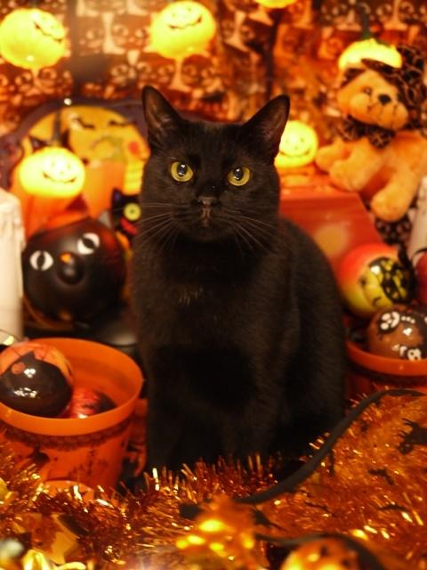 ハロウィン猫 めりぃぽぴんず編。_a0143140_21483703.jpg