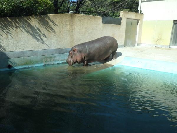 久しぶりに福岡市動物園に行ってきました。_f0337554_18174770.jpg