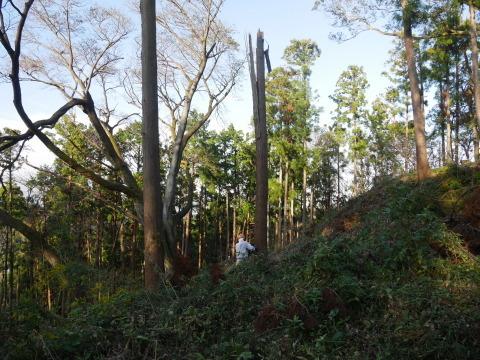 夫婦桜上の中折れスギなど伐採10・30六国見山手入れ_c0014967_09250812.jpg