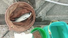 今日もイメージを釣りに 039 3つの台風と止められた認識_c0121570_10070934.jpg
