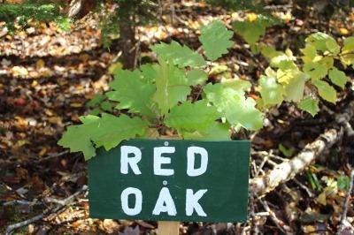 Red Oak_c0353373_17263949.jpg