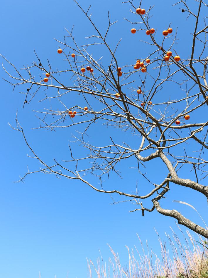 裏山散策  〜10月の終わりに〜_c0334574_13530219.jpg